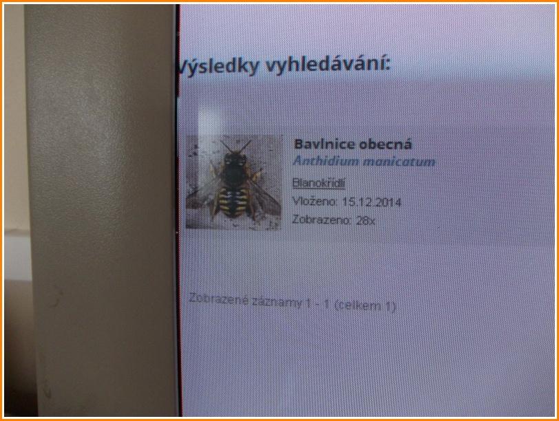 český jazyk (11).jpg